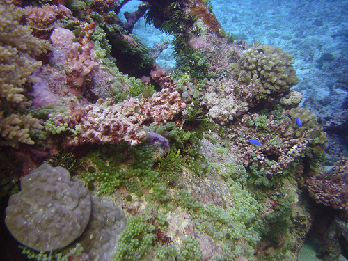 Coral, North Horn, Coral Sea Great Barrier Reef, Australia_18.jpg